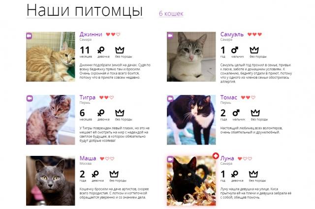 Сейчас в проекте участвуют шесть кошек из разных городов.