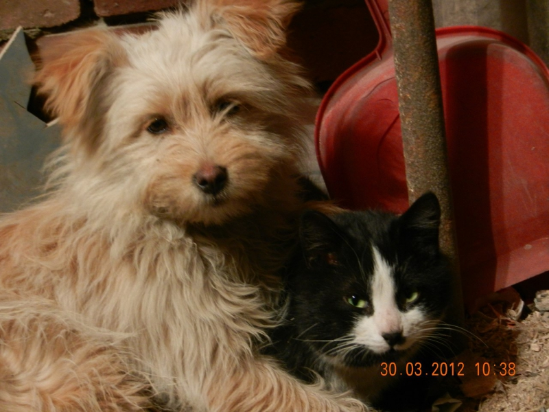 Кошки и собаки в семье Ольги лучшие друзья