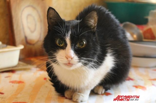 Кошка Лена тоже ждёт переезда, чтобы по традиции первой войти в новый дом