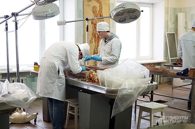 Трупный материал, который изредка удается добыть медицинским вузам, обычно уже теряет первозданный вид