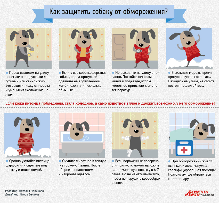 Как защитить собаку от обморожения