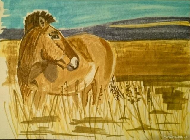Лошадь Пржевальского.