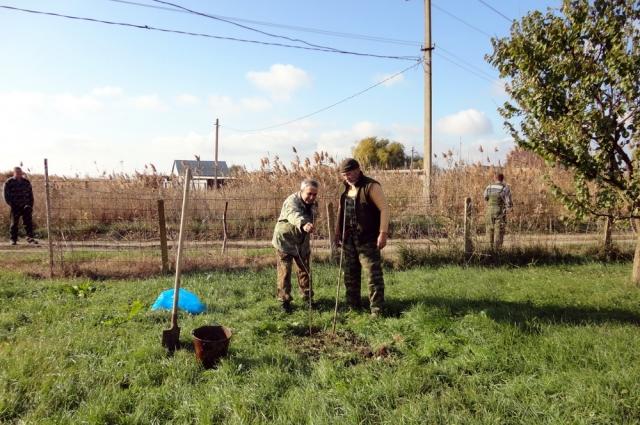 Владимир Жучкин сажает дерево на своём участке в 2011 году, когда проезд ещё был открыт.