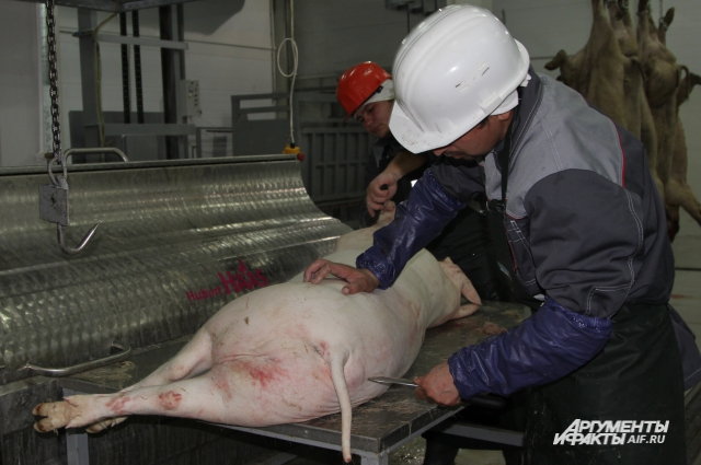 Главный продукт свиньи – мясо.