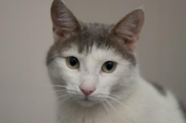 Миша-Цветочек стал вторым котом-донором донской столицы.