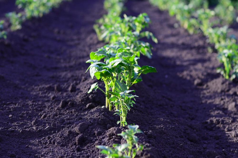 Земля должна приносить урожай.