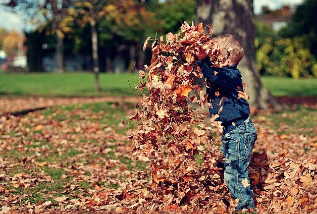 Во время прогулки осенние листья, возможно, радуют, но вот на дороге они опасны.