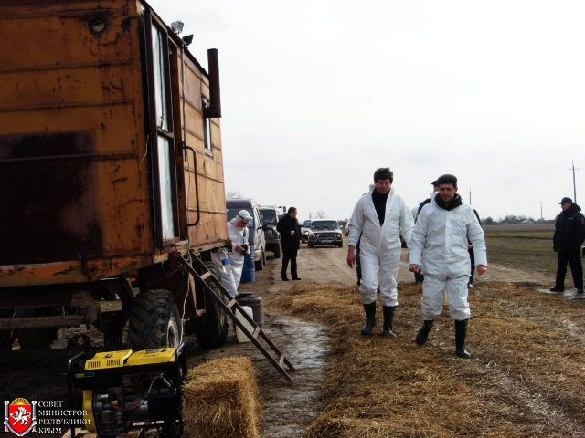 Африканская чума свиней в Крыму