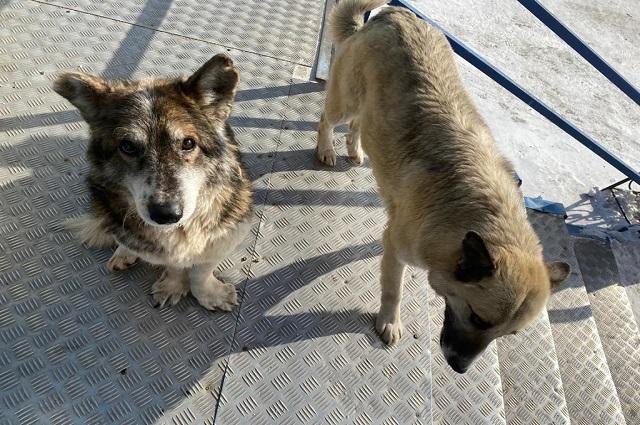 За 2020 год в Якутске было отловлено более 2300 собак.