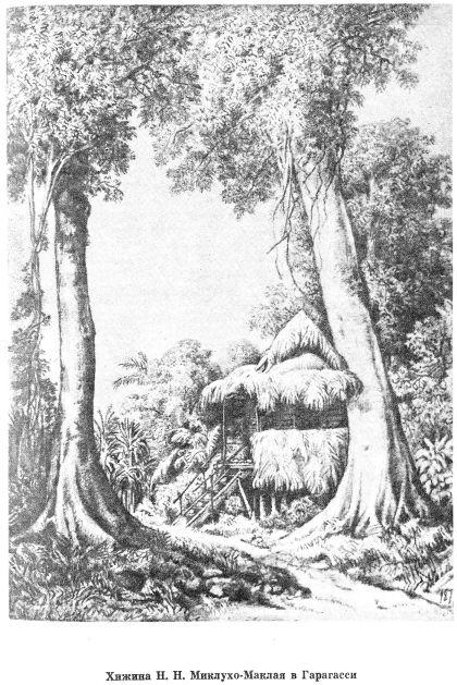 Хижина в Гарагаси. Гравюра по рисунку Миклухо-Маклая.