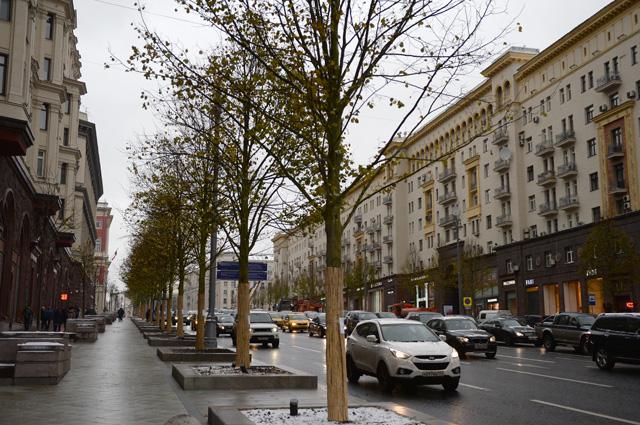 Липовая аллея, высаженная врамках программы благоустройства «Моя улица», наТверской улице вМоскве.