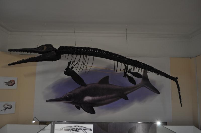 Ихтиозавр.
