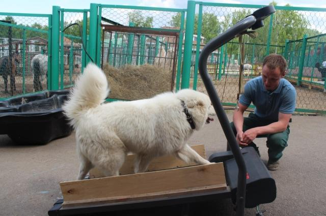 Собаки тоже хотят быть в хорошей физической форме.