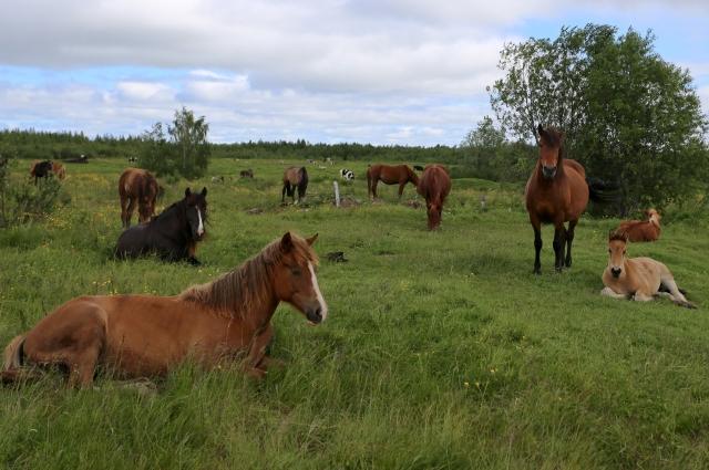 Табун лошадей.