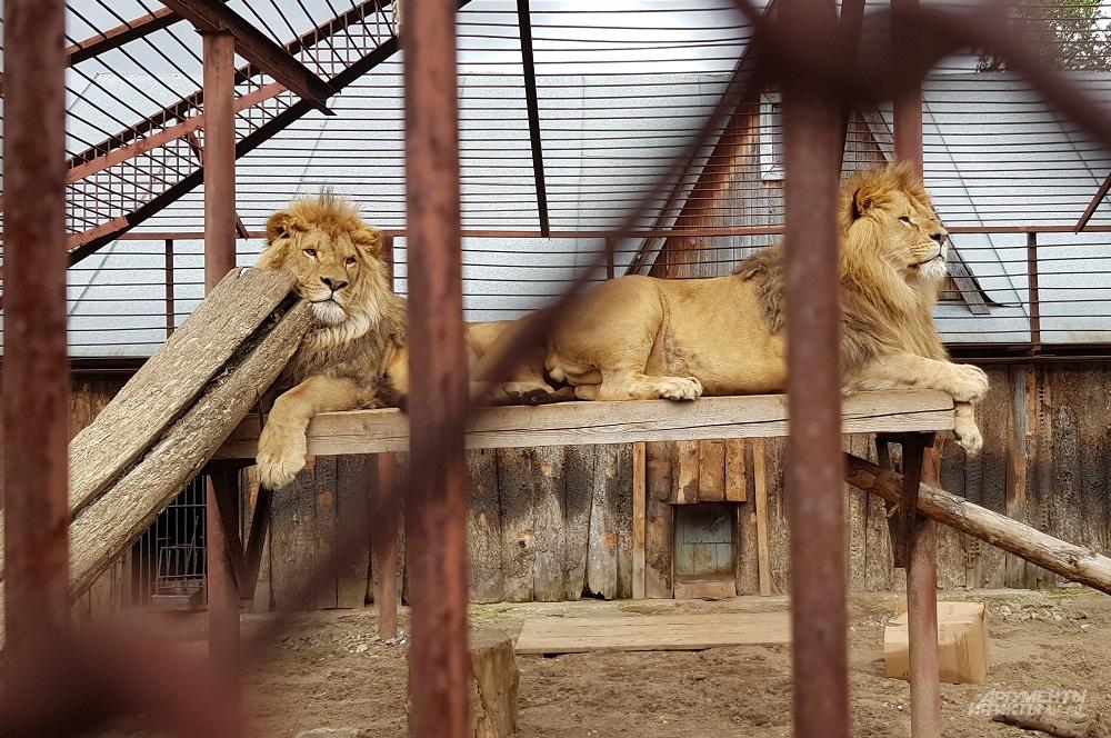 Львов Ричи и Леро посадили на диету.