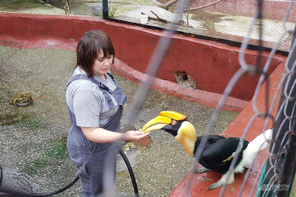 Сотрудница Ирина кормит калао варёным яйцом на завтрак.