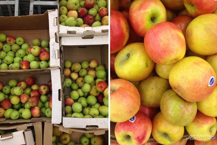 Слева яблоки российские, справа яблоки импортные