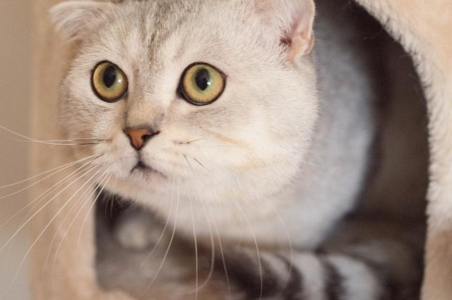 Семья Вероники не могла себе позволить купить породистого котенка.