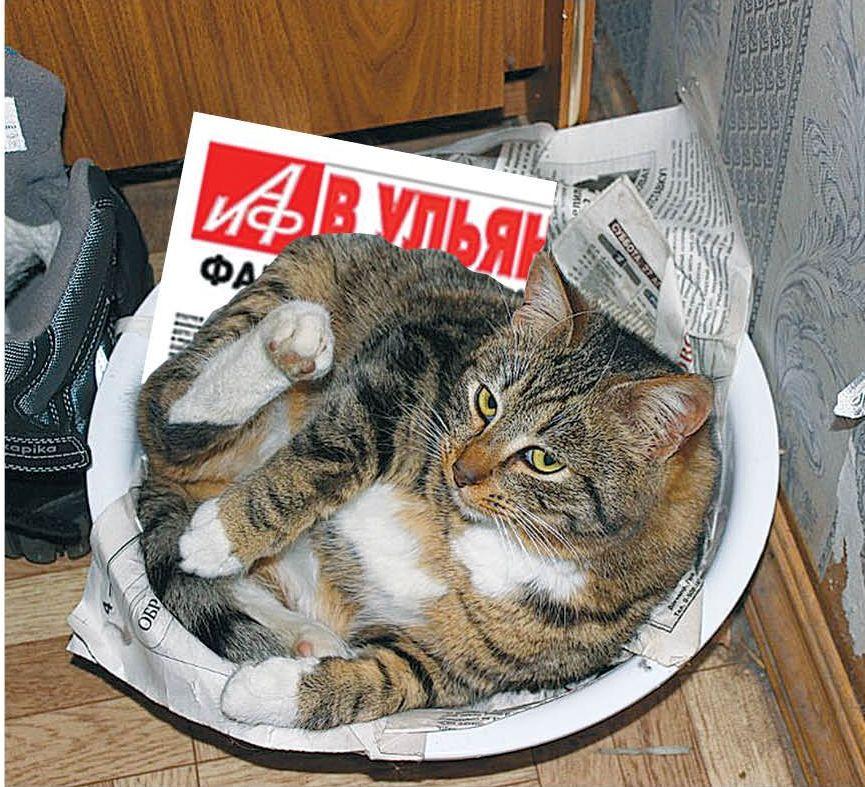 «Любимое место отдыха Сеньки – тазик, застеленный газеткой, чаще всего это «АиФ» или «Карсунский вестник»