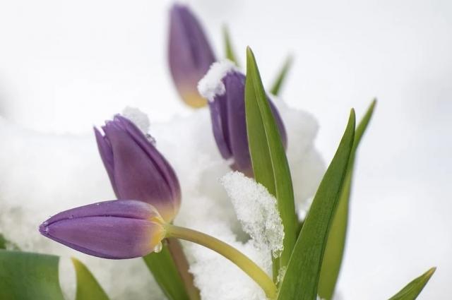После дороги не торопитесь вносить цветы в дом. Дайте им немного согреться в тамбуре или прихожей.