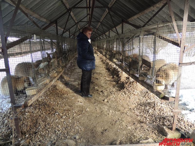 На звероводстве не хватает сотрудников для ухода за животными