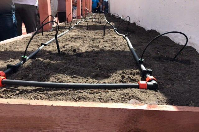 В теплице настроен автоматический полив растений.