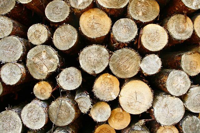 Получатель леса обязан использовать всю древесину на прописанные в договоре цели.