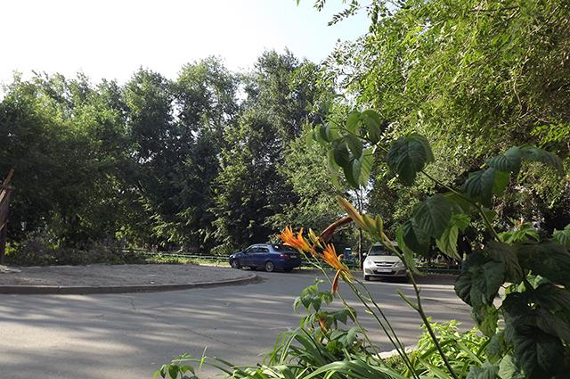 Чиновники посчитали, что деревья заражены грибком и обречены на спил.