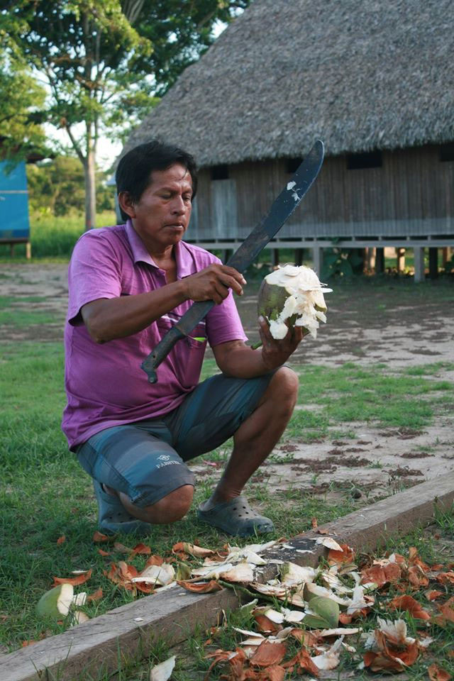 Таким мачете индейцы чистят кокосы.