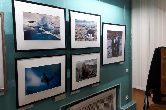фотосюжетов выставки «Добро пожаловать в Антарктиду!».