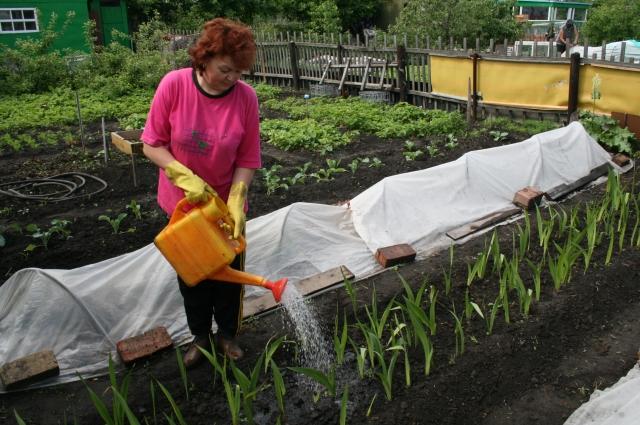 Для многих садоводов дача - одно из главных и дорогих сердцу удовольствий в жизни.