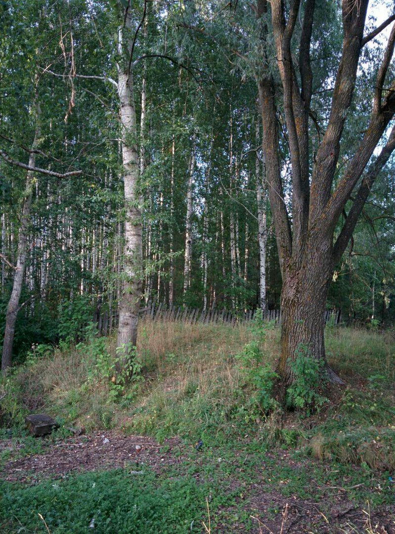 Лес, посаженный Алексеем Максимовым