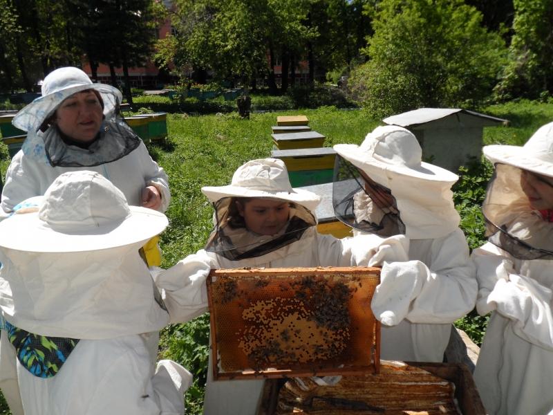 Медоносные ресурсы нашей страны позволили бы значительно увеличить численность пчелосемей.
