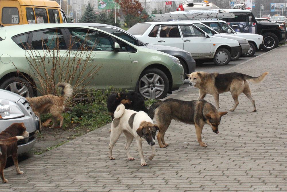 В полторы тысячи рублей обходится стерилизация одного животного.