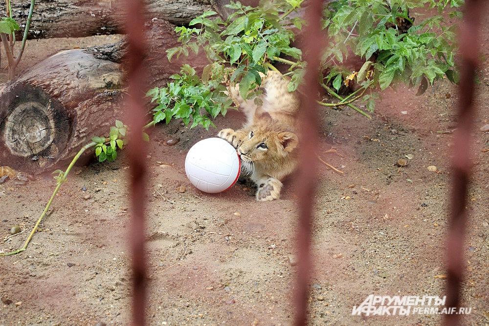 Любимое занятие Ричарда – играть с мячиком и валяться на траве.