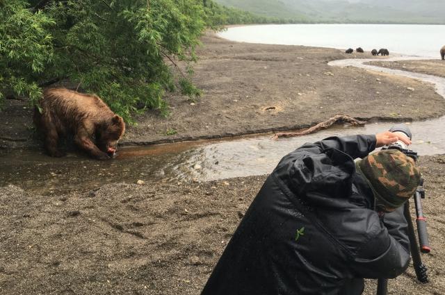 К медведям не подходиил ближе, чем на 15 метров. Несмотря на то, что медведи в тех местах имеют доступ к необходимым кормам, находятся под охраной и, потому более чем довольны жизнью, это всё-таки дикие животные, без знаний правил поведения в заповеднике, находиться там нельзя