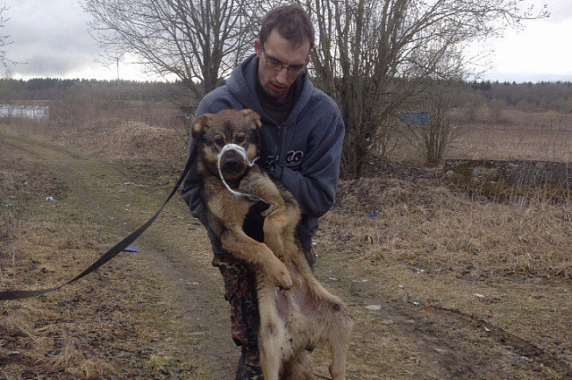 Волонтеры подобрали раненого пса под Гатчиной.
