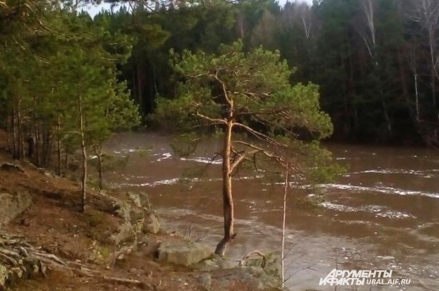 До паводка в Верхотурье можно было стоять у сосны и смотреть вниз на реку.