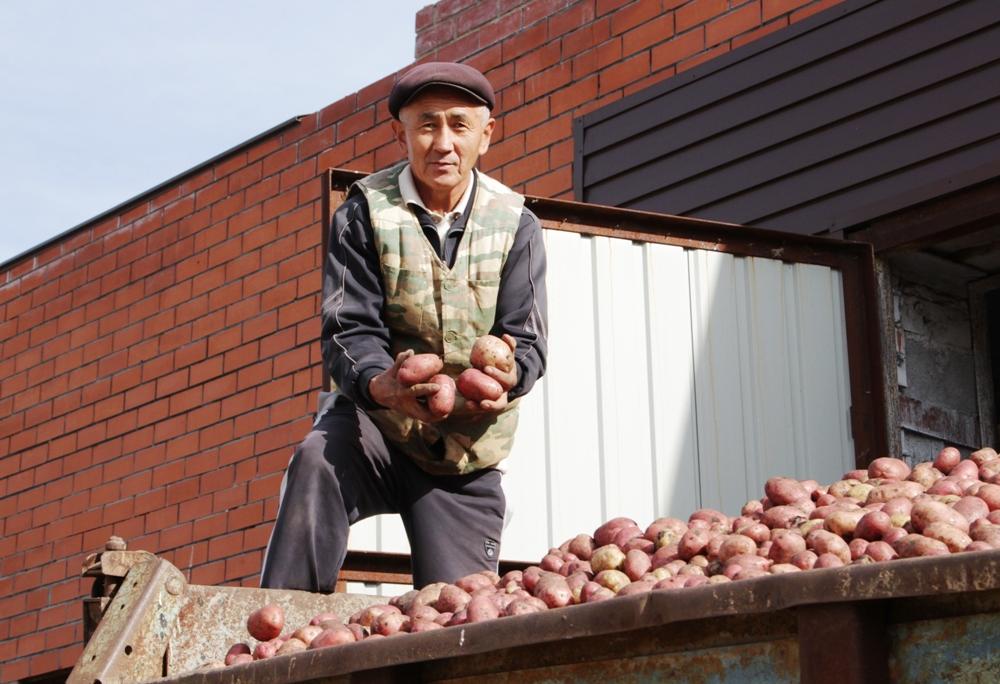 Овощи и многие другие продукты для томинских школьников и воспитанников детского сада теперь бесплатны. Механизатор местной агрофирмы Александр Осмонов гарантирует, что картошка к детскому столу поступает отменного качества.