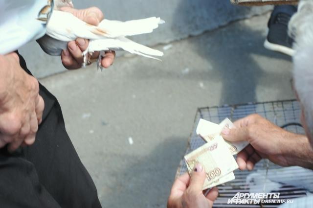 Очень дорогих голубей на рынок не привозят. Торгуют из дома, с глазу на глаз.