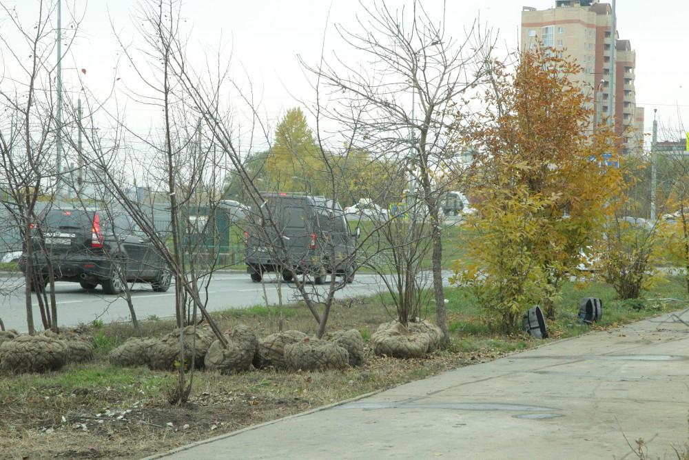 В новых скверах высадят много деревьев.