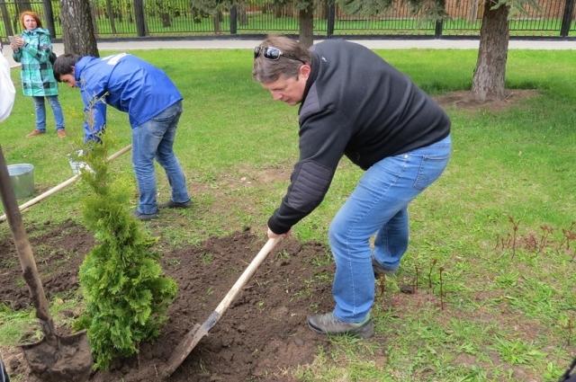 В посадке деревьев принял участие Евгений Авилов