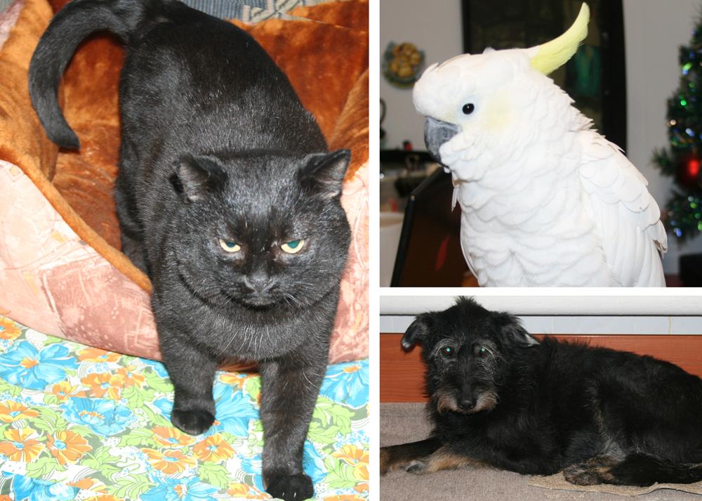 «Дворянка» Куба, собака почтенного возраста, кот Джон Сноу и какаду Гоша – постоянные жители центра.