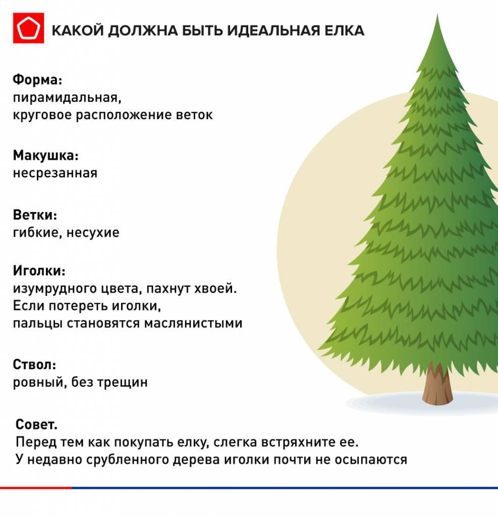 Выбор елки