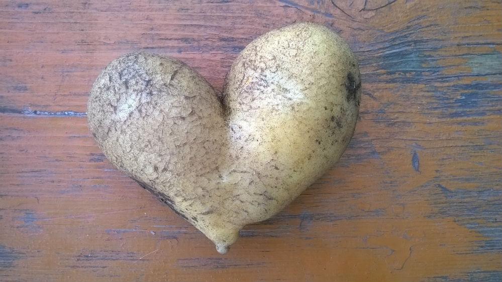 Ирина Малкина: «Вот та- кой необычный урожай вырос на нашем участке в посёлке Перво- майский Кузоватовского района. Растём с любовью!»