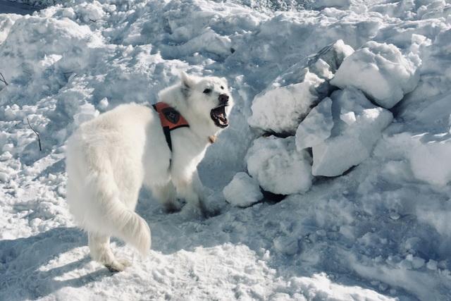 Собаки-спасатели обозначают местонахождение пострадавших.