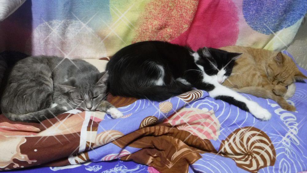 Кошки Марса, Маня и Василиса.