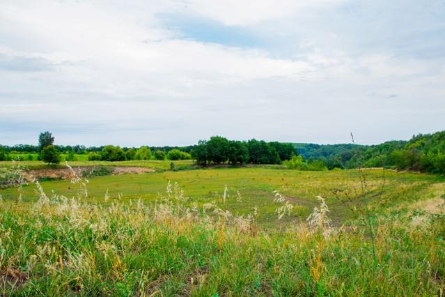 3.Бывшая свалка в Борисовке превратилась в зеленый луг.