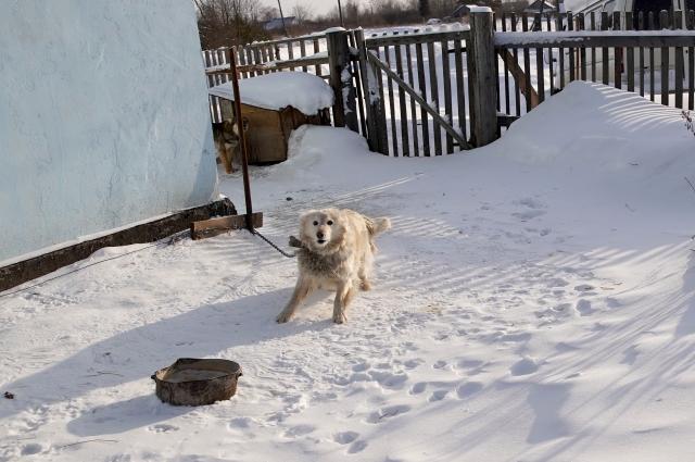 Собаки научились есть снег вместо воды.