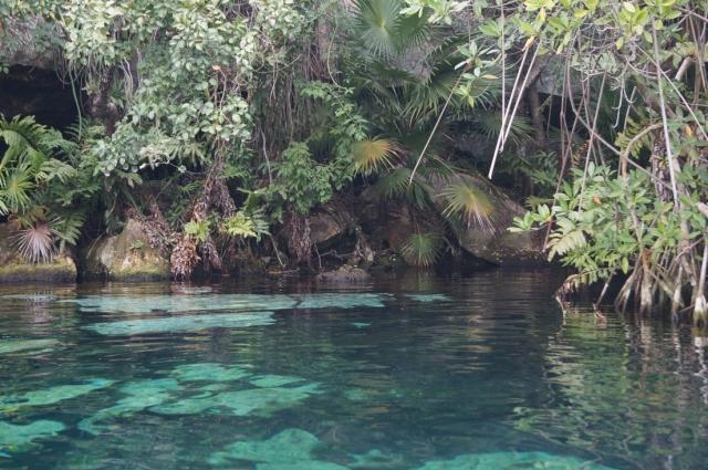 Вода в сенотах кристально чистая и прозрачная.